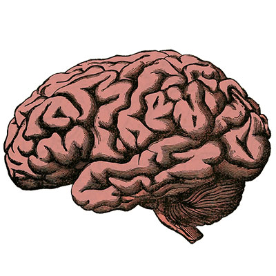 best brain supplements cognitive