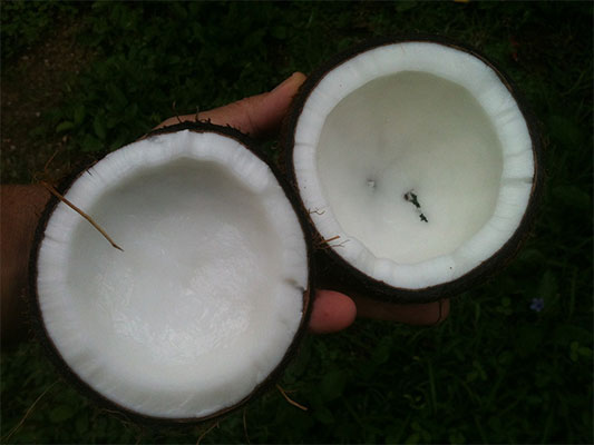 Coconut Oil VS MCT Oil: Which is better?